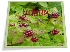 Ягоды и листья костяники