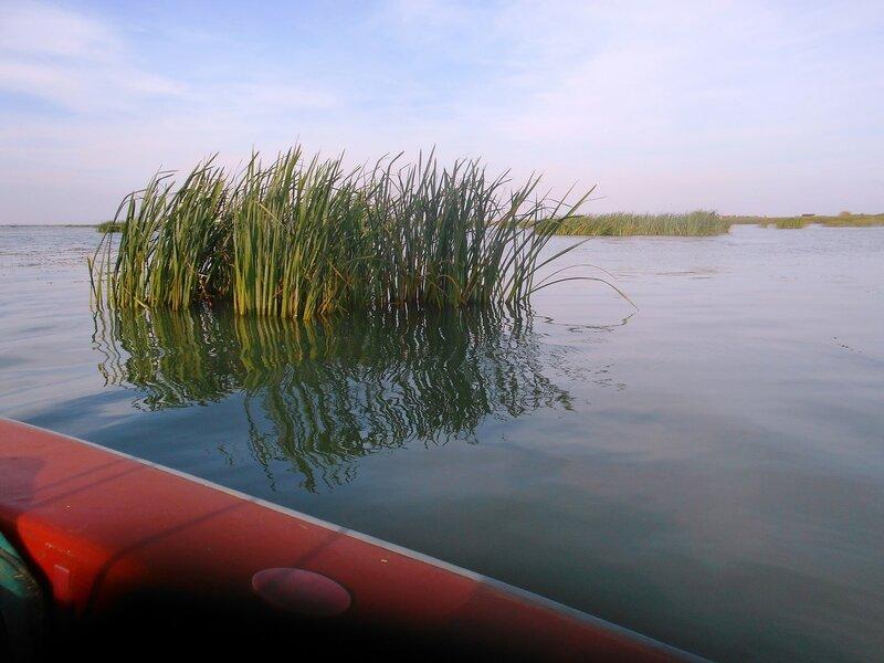 Островки растительности с правого борта ... DSCN9398.JPG