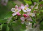 Весны цветение