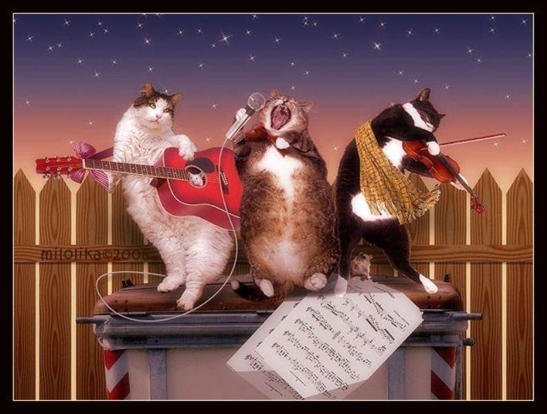Поющие коты поздравление