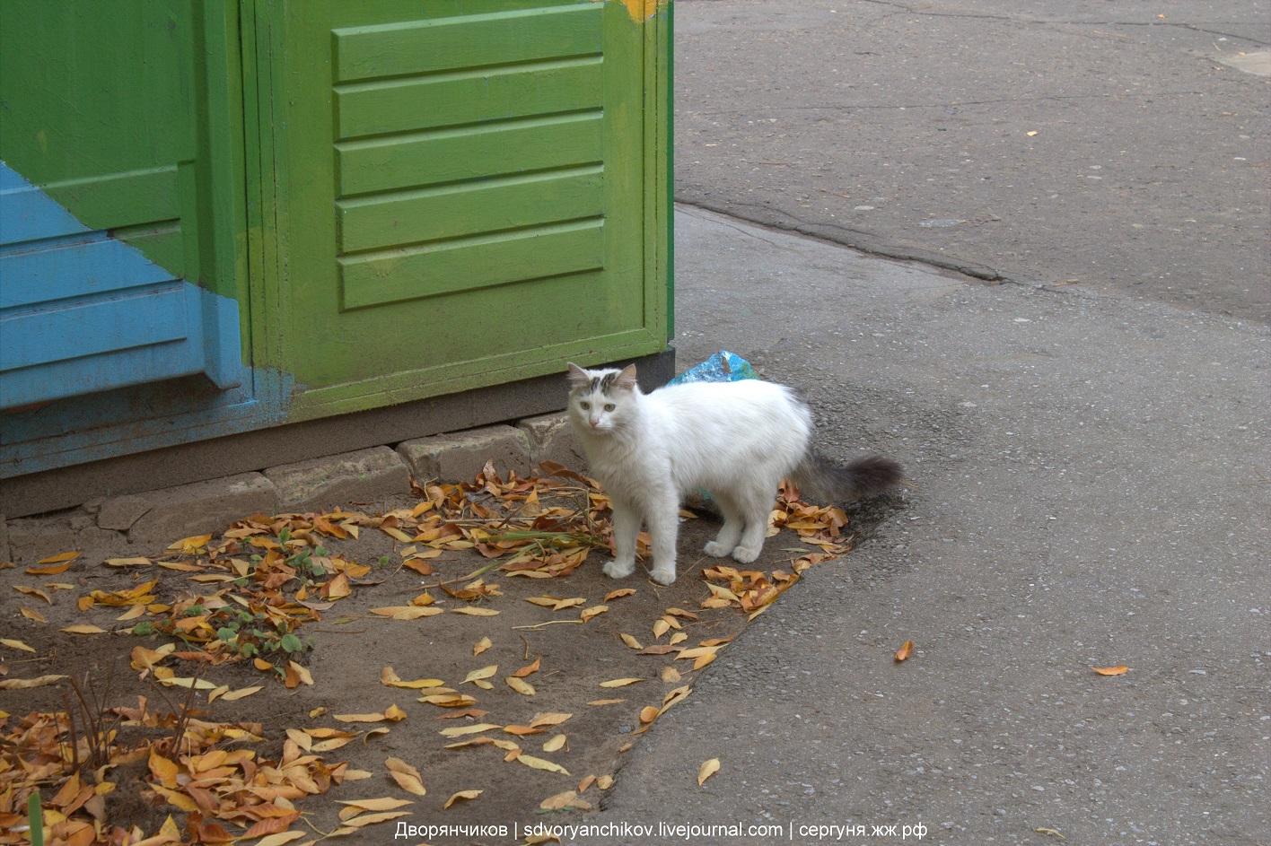 Маська - Парк ВГС - Волжский