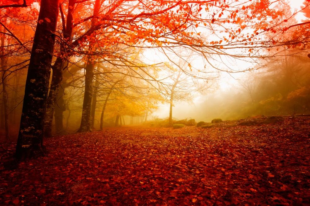 15причин, покоторым осень гораздо лучше лета (14 фото)