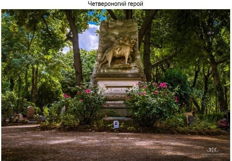 Знаменитый пес породы, впоследствии ставшей известной как сенбернар, в начале XIX века работал с