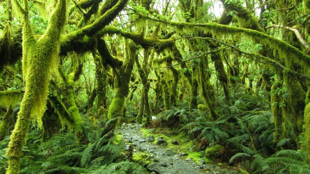 Тропа Милфорда — один из самых знаменитых пеших маршрутов Новой Зеландии.