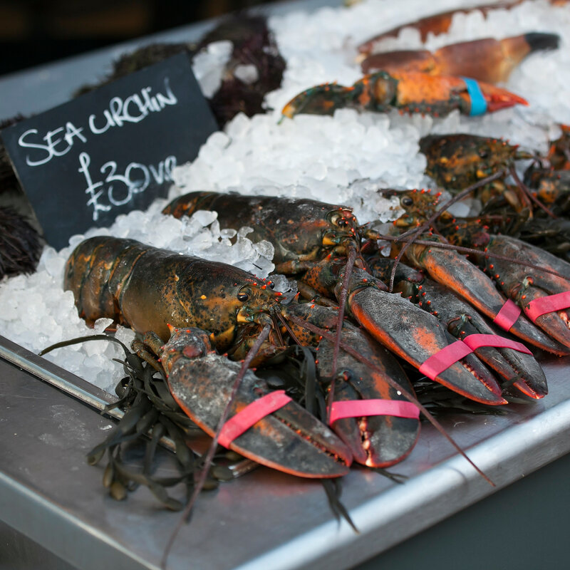 live lobsters on ice for sale