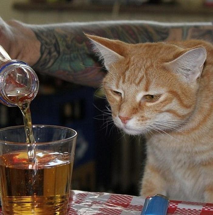 Коту больше не наливать!