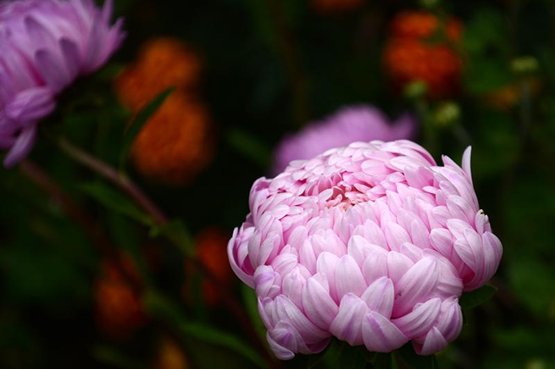 цветы дождь 12.jpg