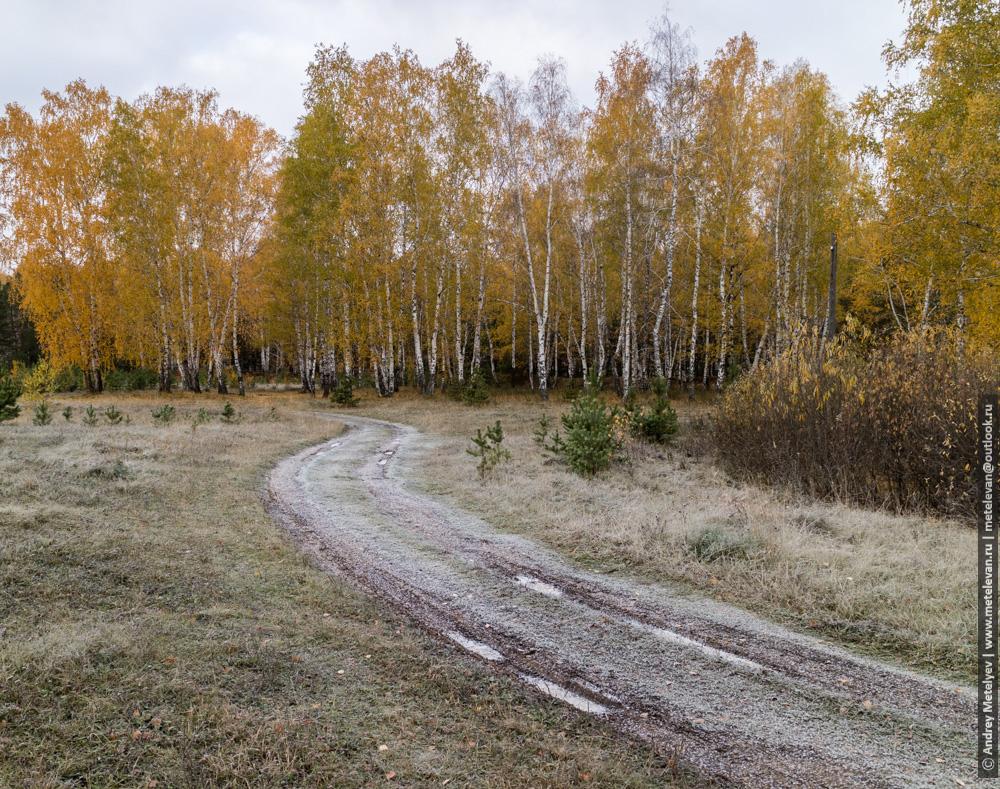 иней на дороге и на деревьях