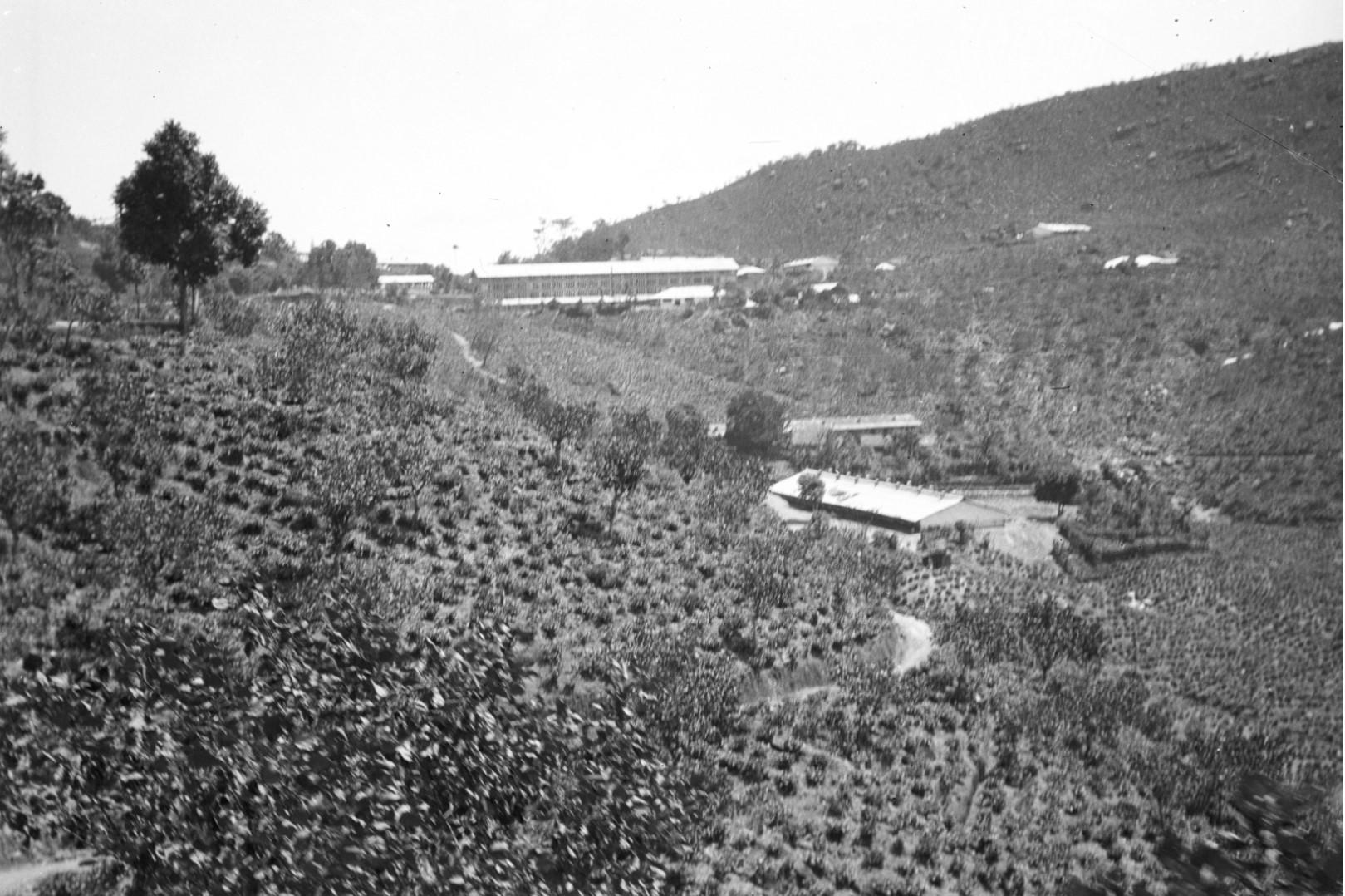 202. Плантация чая в окрестностях Бадуллу