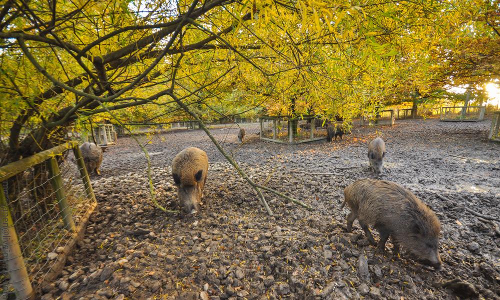 Tierpark-(4).jpg