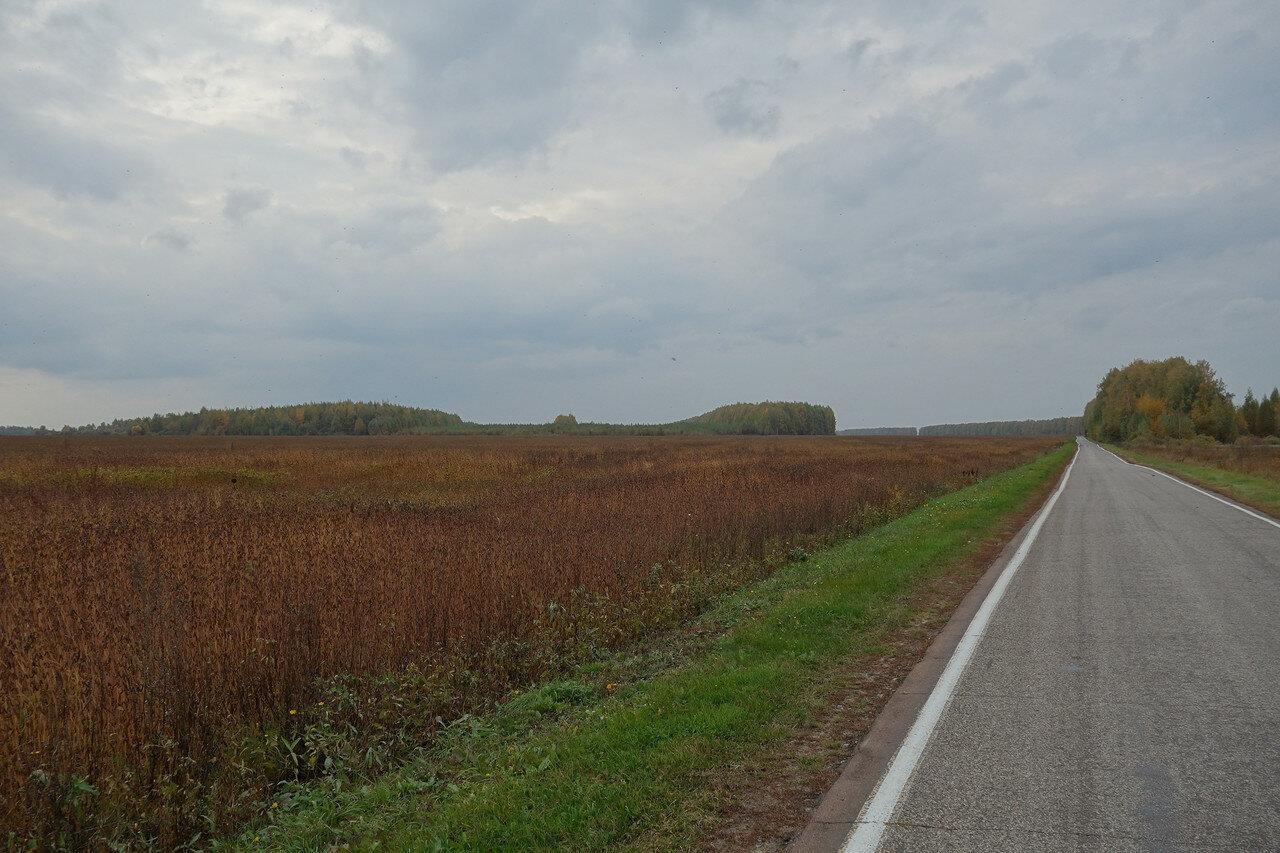красноватое поле и МУХИ!