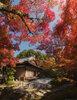 Япония, ноябрь