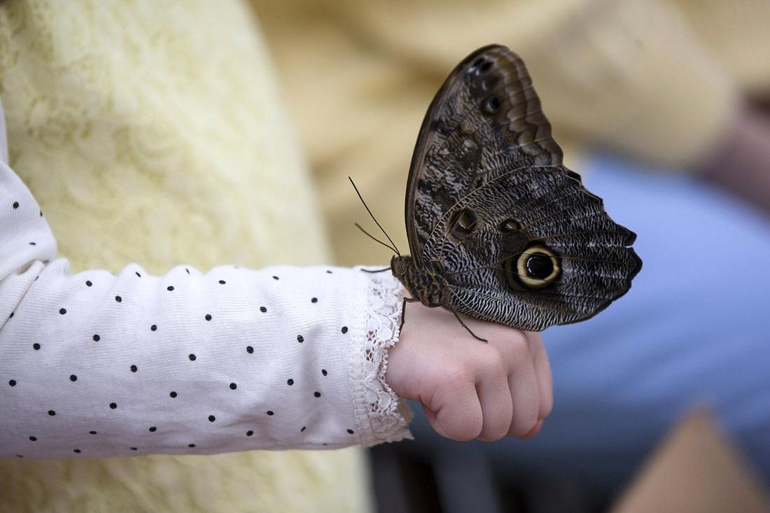 Sensational Butterflies - уникальная выставка бабочек