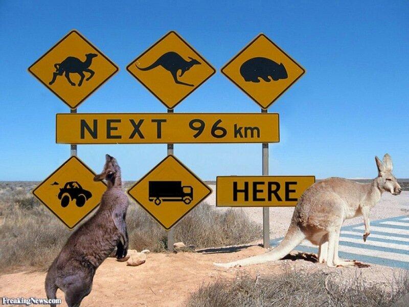 Уникальное правило дорожного движения в Новой Зеландии