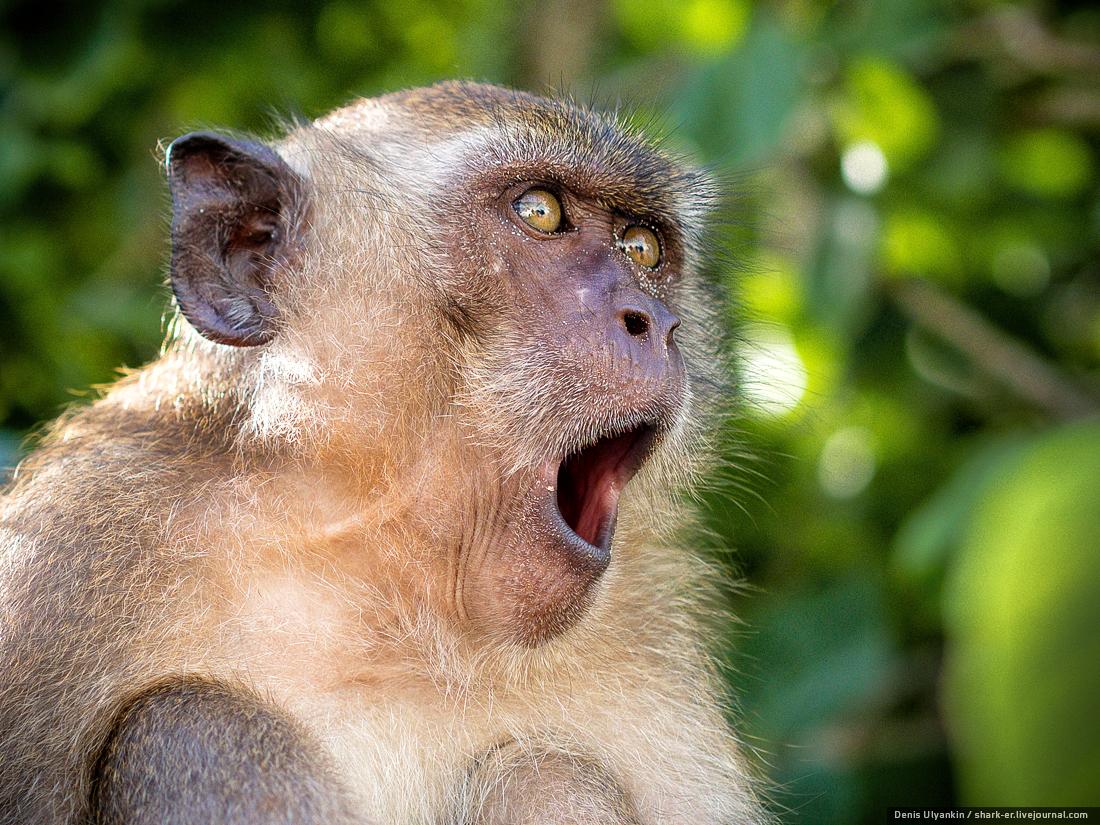 Картинки мимика обезьян