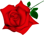 Rose_by_VooDoo4u2nv.png