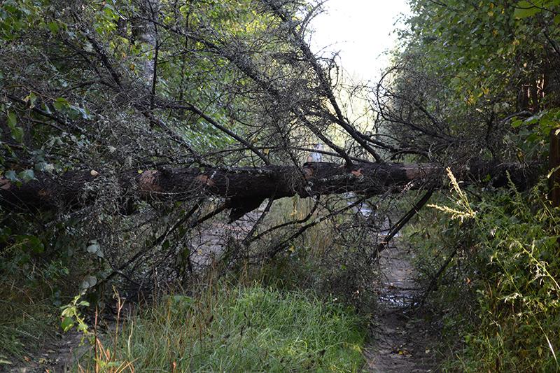леса бурелом.jpg
