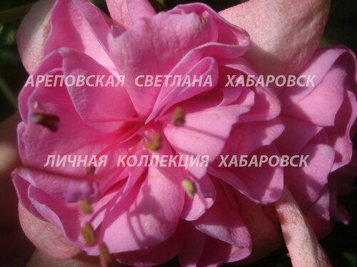 НОВИНКИ ФУКСИЙ. - Страница 5 0_1577b7_e57b4edf_L