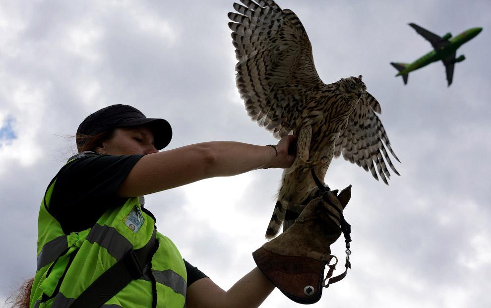 Средняя опасность — голуби, грачи, чайки, куропатки, чибисы. Все они имеют вес от 150 до 500 гр