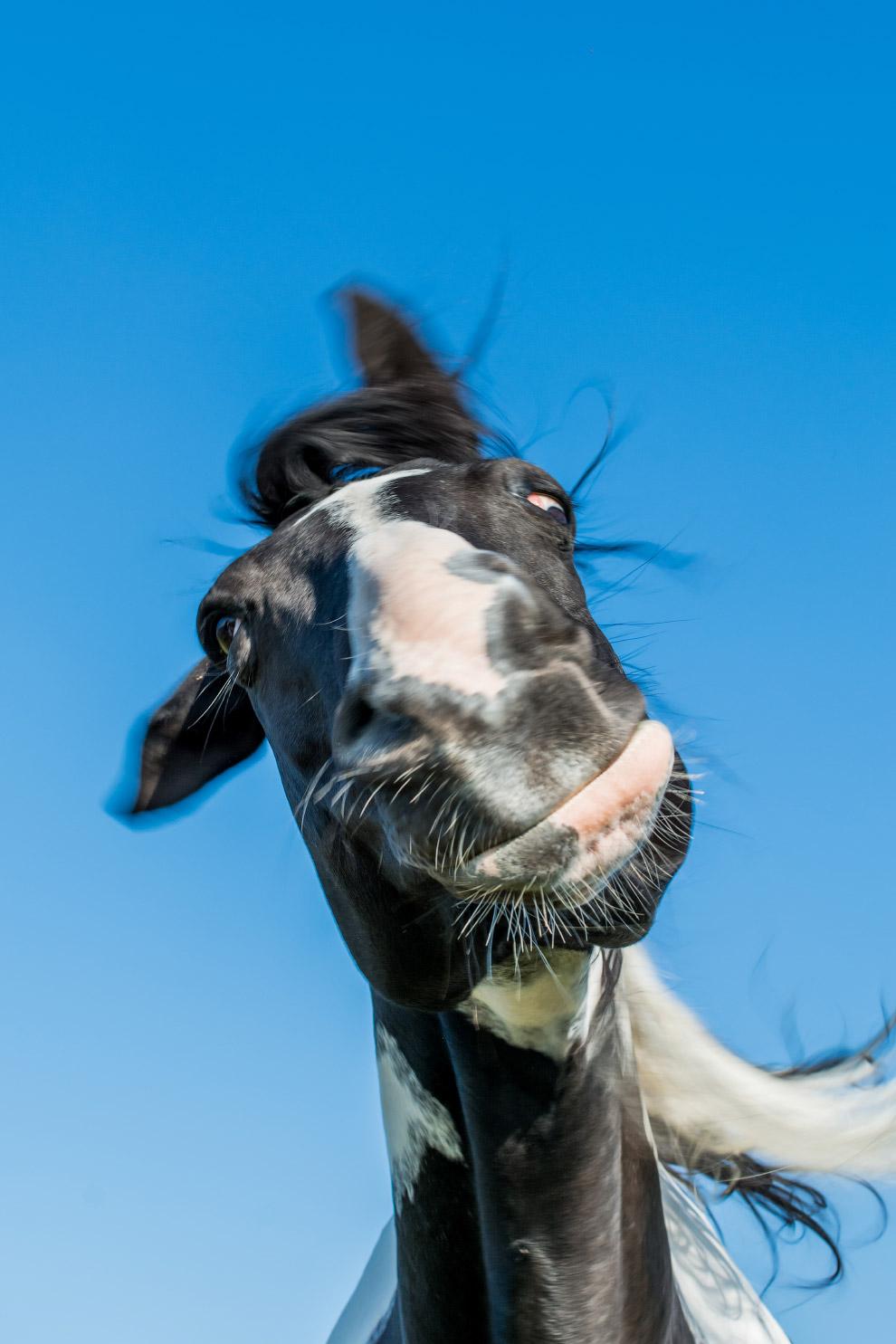 14. Главное — не лопнуть. Бурундук. (Фото Barb D'Arpino   Barcroft Images   Comedy Wildlife Pho