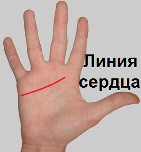 1. Если линия сердца поднимается от внешнего края и заканчивается под указательным пальцем – Вы