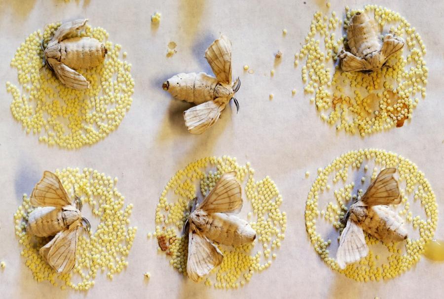 13. Современные бабочки слепы и не умеют летать, это результат тысяч лет селекции. Каждая бабочка жи
