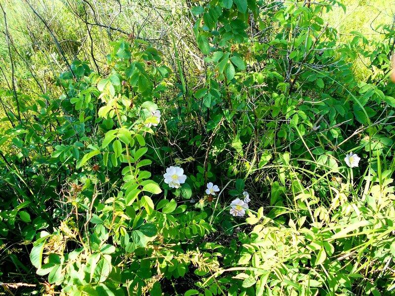 В растительном обилии ... DSCN5655.JPG