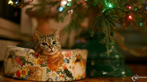 wpapers_ru_Кот-и-Новый-год.jpg