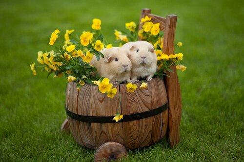 Тюбик и Рюбик с цветами