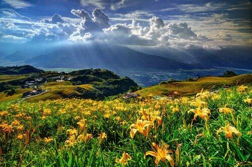 Лилейники на фоне гор