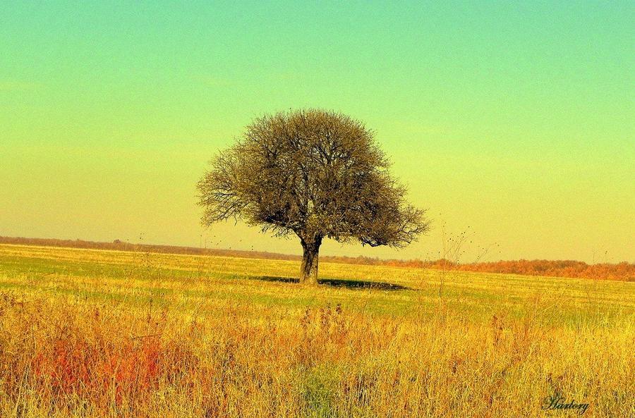 7. Каждое дерево выделяет в сутки столько кислорода, что его хватает для 2 человек.