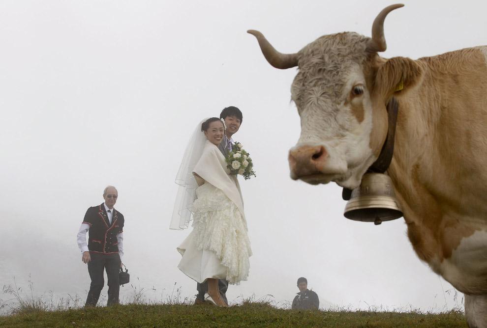 9. То ли ураган разнес заправку, то ли буйные коровы. Штат Техас, 18 сентября 2008. (Фото Mark