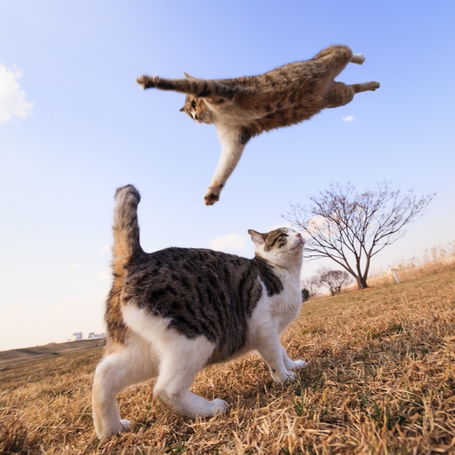 © 500px  Погода теплая, местами небольшие коты.