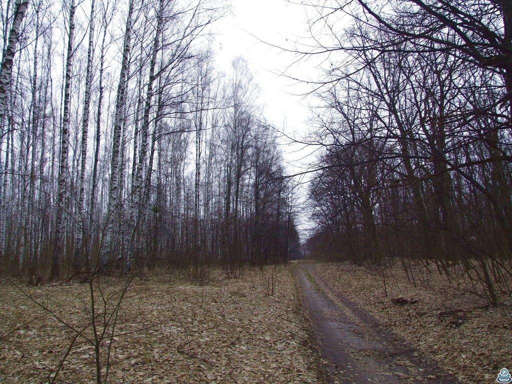 Дорога вдоль юбилейного леса