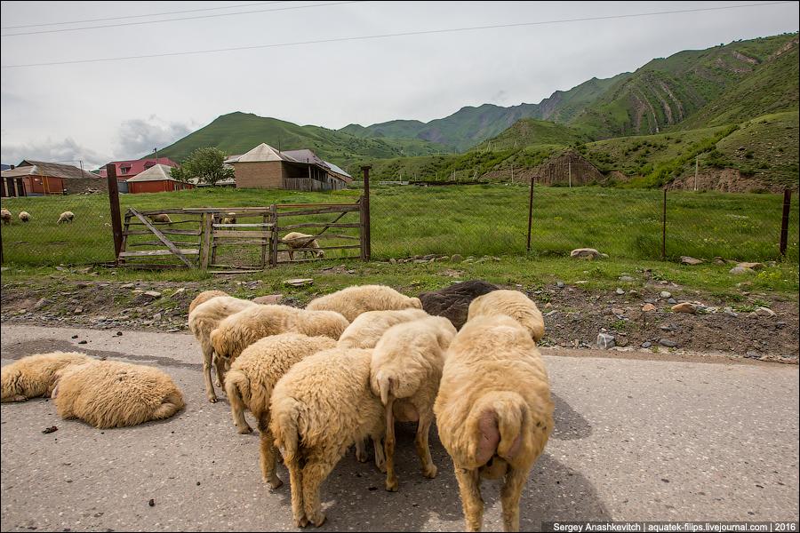 Поездка в Чечню