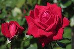 Приглашаем на цветение в Медведково, ул. Широкая, 27!