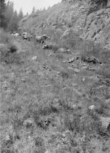 Долина реки Агиас. Караван идет через долину
