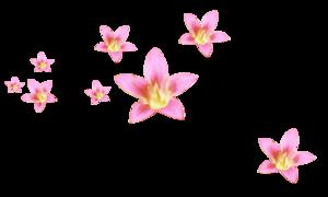 раняя весна