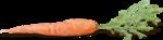 CreatewingsDesigns_LG_Carrot1_Sh.png