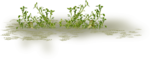 kimla_littlegarden_grass.png
