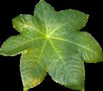 MRD_Toe-Tally-Faerie-leaf(1).png