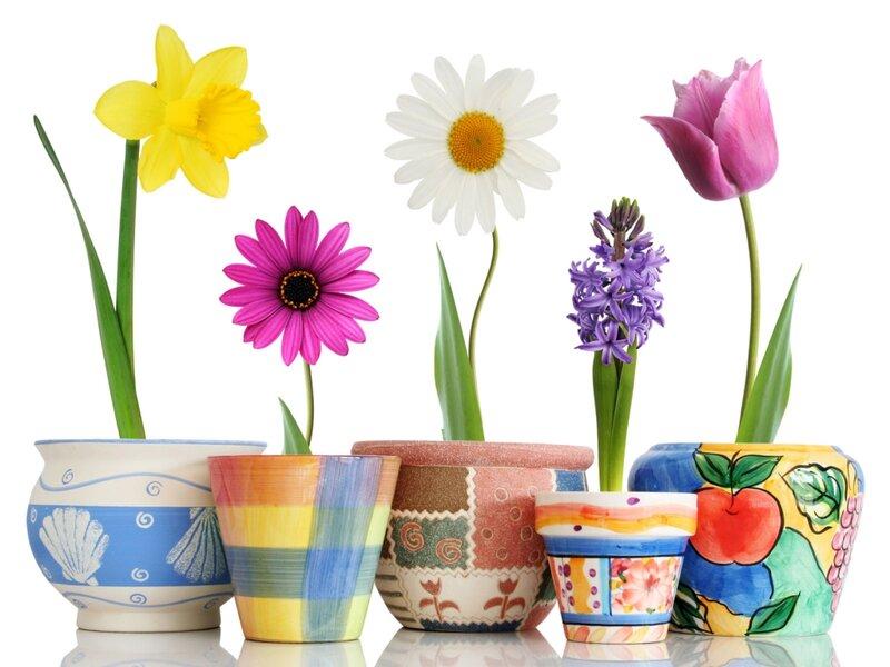 Цветы для девам бисер инфо схемы