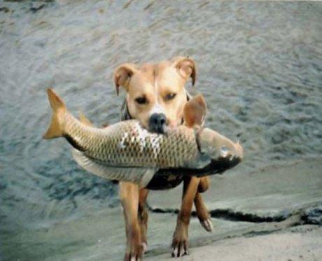 Собака - рыболовака