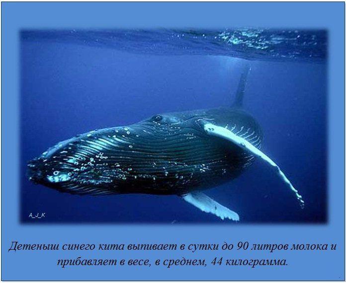 http://img-fotki.yandex.ru/get/6200/130422193.e8/0_76051_b5d255eb_orig