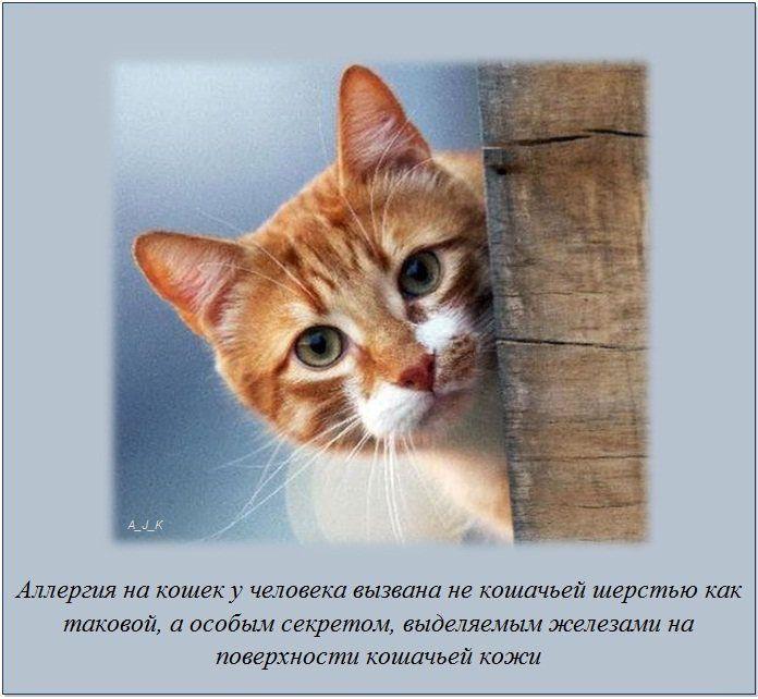 http://img-fotki.yandex.ru/get/6200/130422193.e8/0_76054_9174d32e_orig