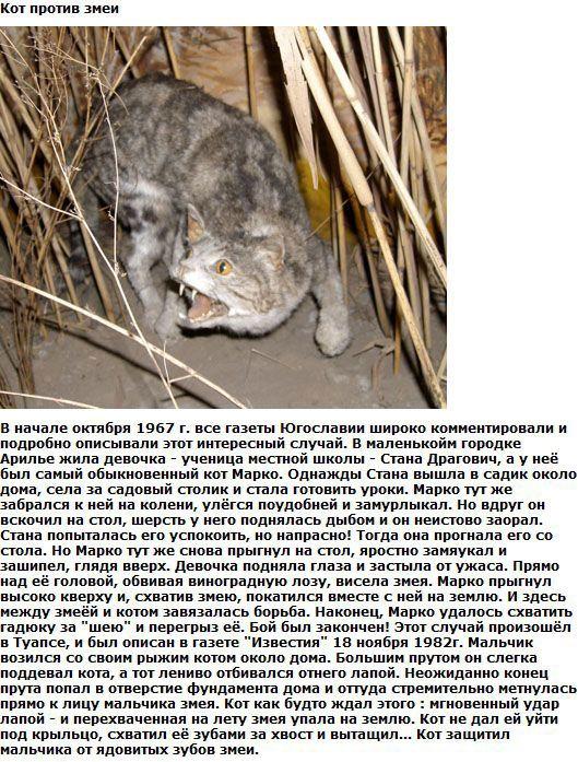 http://img-fotki.yandex.ru/get/6200/130422193.ea/0_76152_4cdcde65_orig