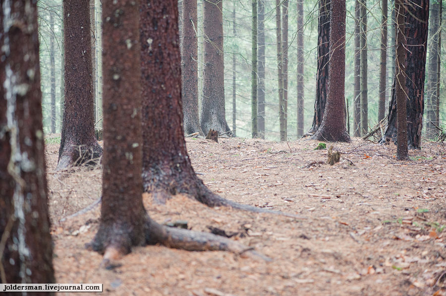 лес германия