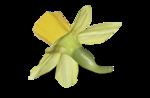 natali_design_easter_flower12-sh2.png