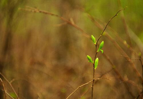 веточка, одиночество, одинокая веточка, листочки, весна, природа, Красноярск, Академгородок