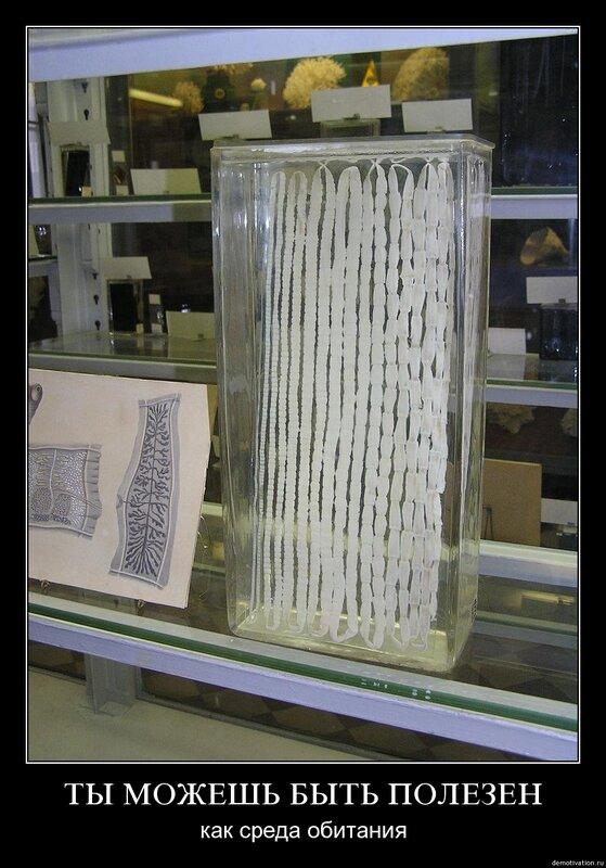 паразиты в костях человека видео